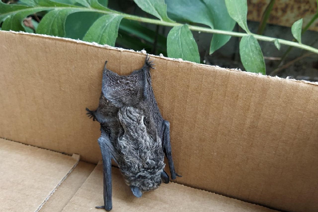 Упала с крыши: летучая мышь атаковала жилой дом на Южном Урале