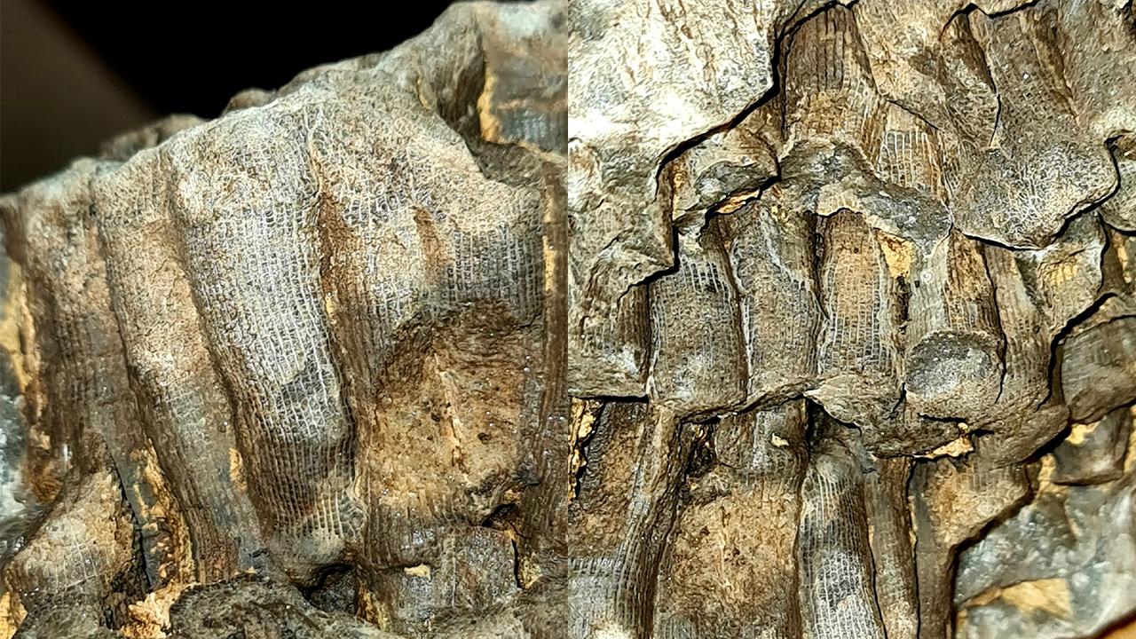 «Находка века»: в Челябинской области нашли древние кораллы, которым минимум 66 млн лет