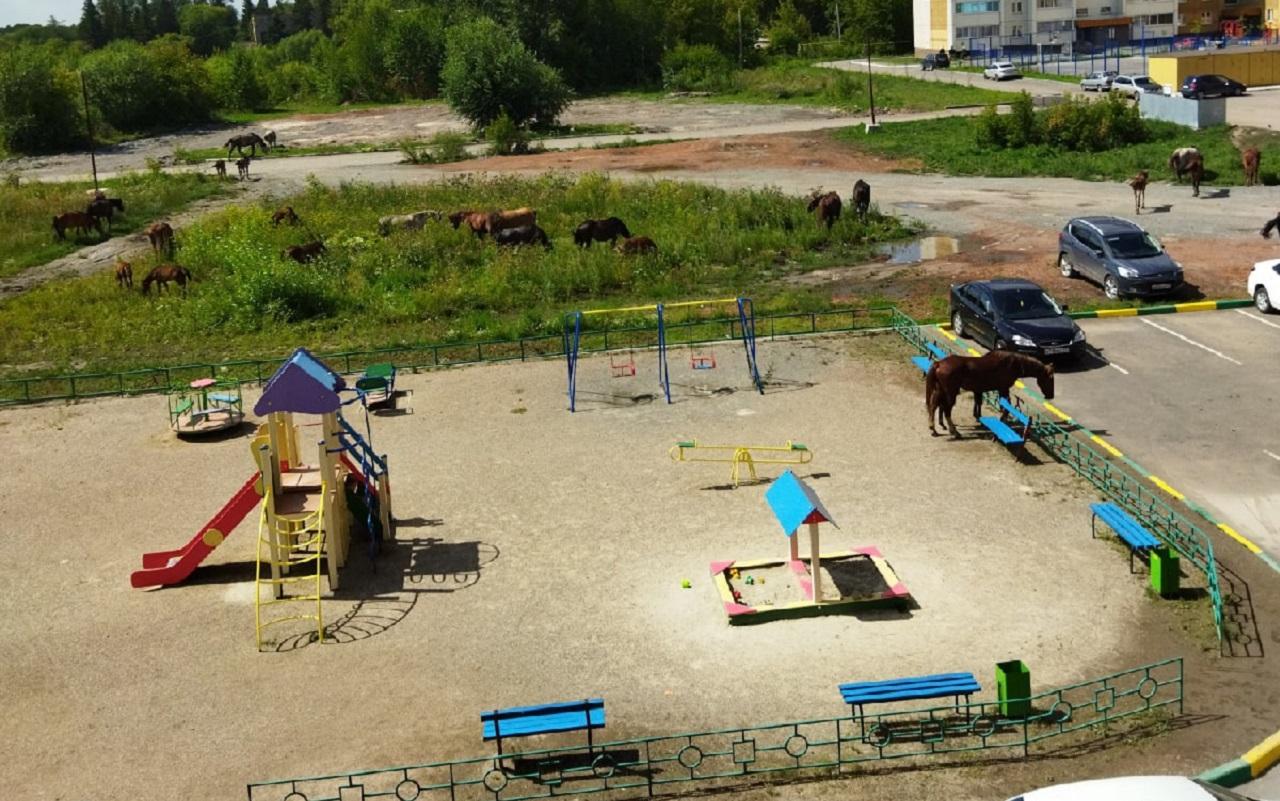 «Косят траву»: в Челябинской области табун лошадей оккупировал детскую площадку