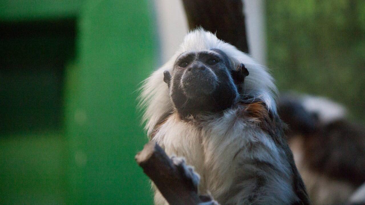 Обезьяны могут заболеть: в зоопарке Челябинска ввели ограничения