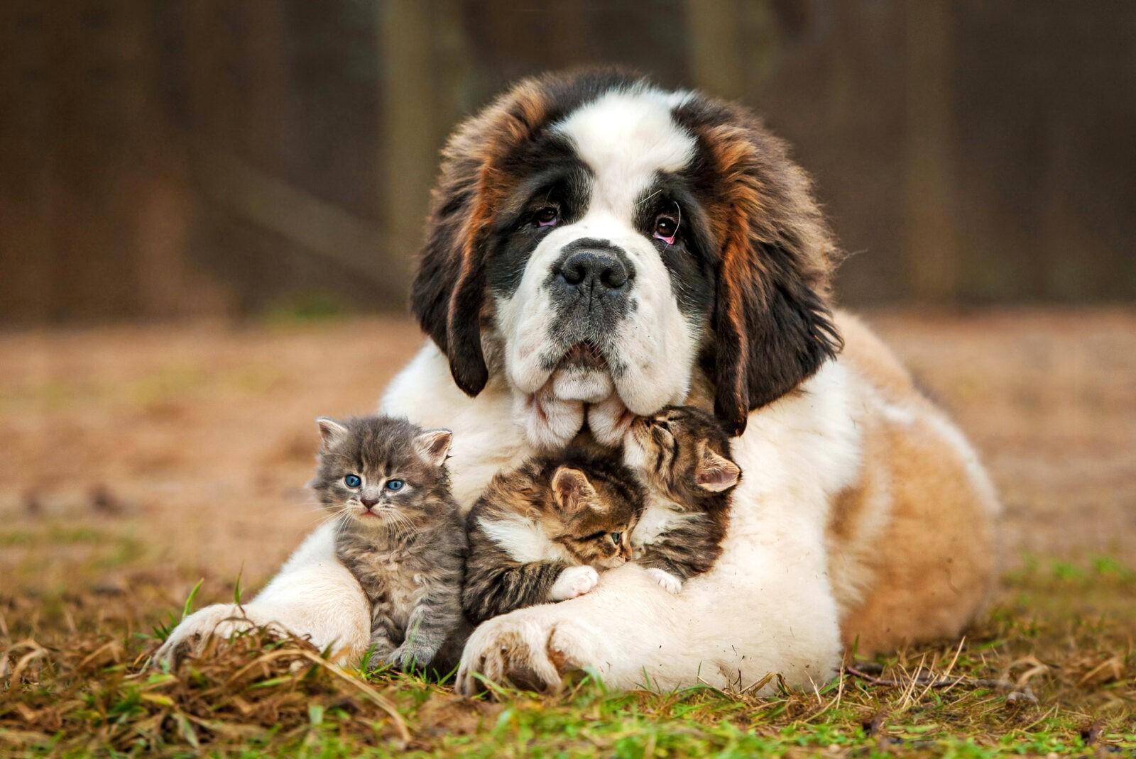 Гороскоп для тех, кто родился осенью: если бы вы были собакой