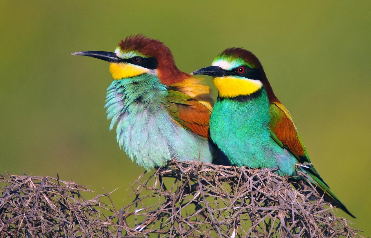 Яркие и пугливые: фильм об удивительных птицах снимают на Южном Урале