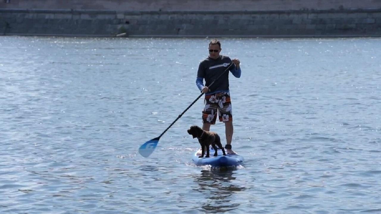 Собака покоряет водоёмы на сапборде в Челябинске