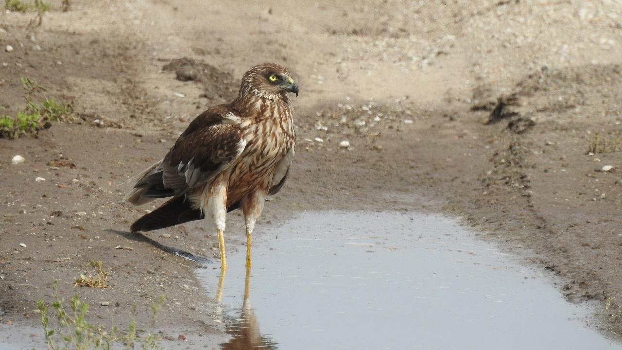 Хищника с худыми ногами сфотографировали в Челябинской области