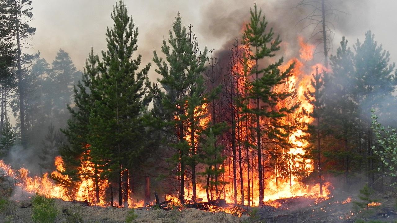 Возможны пожары: леса и озера на Южном Урале из-за жары закрывают для туристов