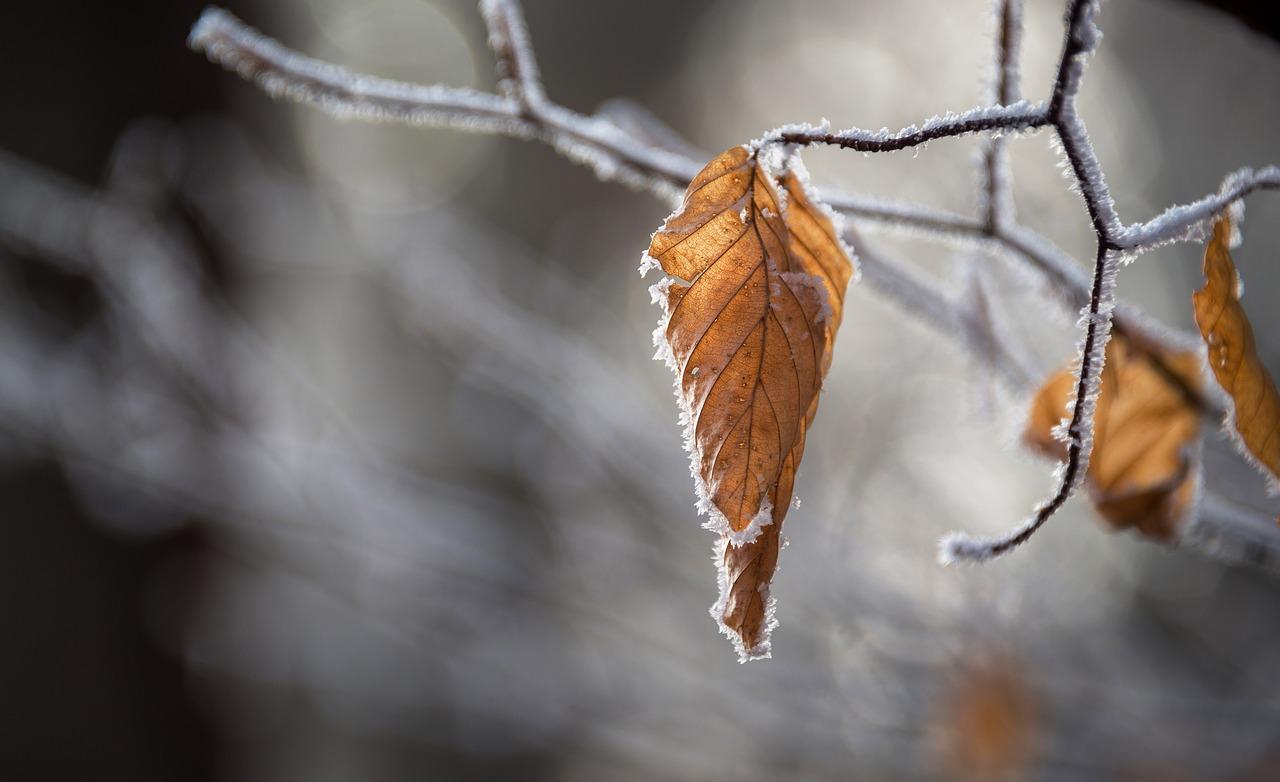 Синоптики предупредили о первых снегопадах на Урале