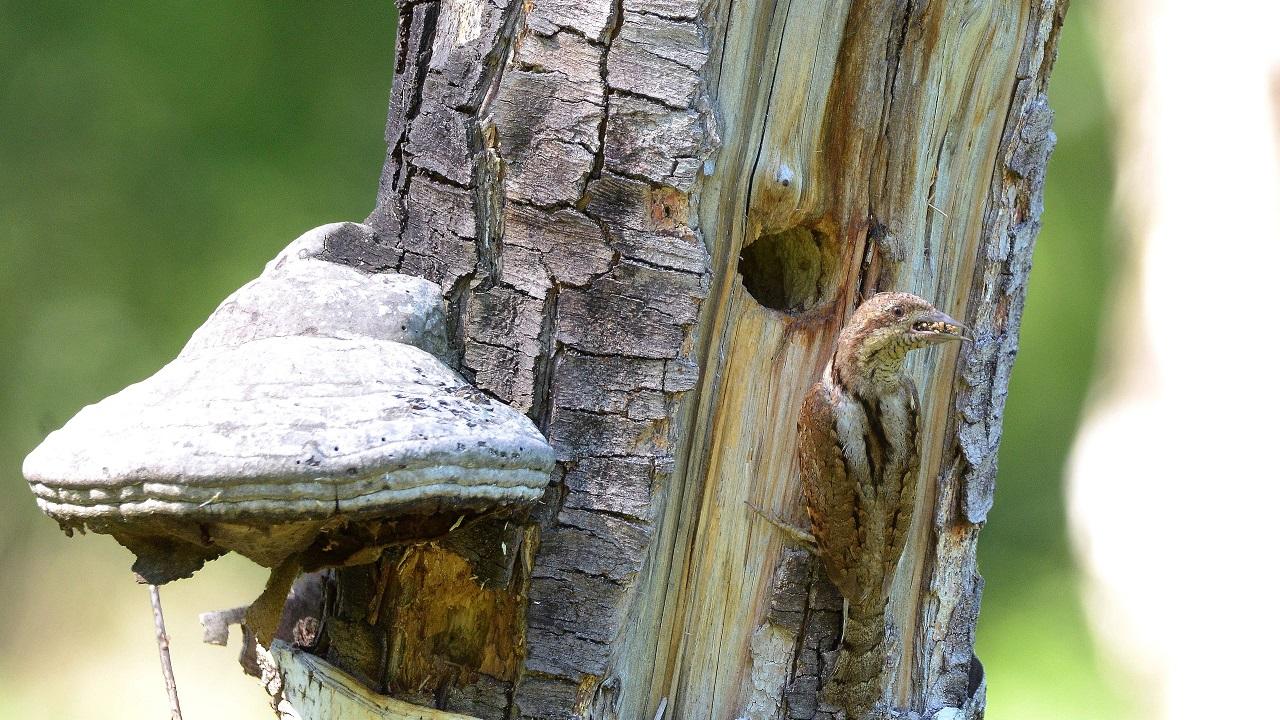 Наглые птицы выгнали из гнезда семейную пару в Челябинской области