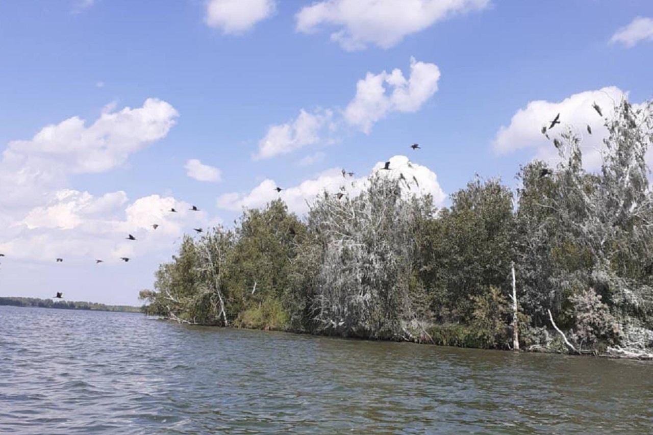 Ныряльщики с длинными клювами: необычные птицы оккупировали озеро на Южном Урале