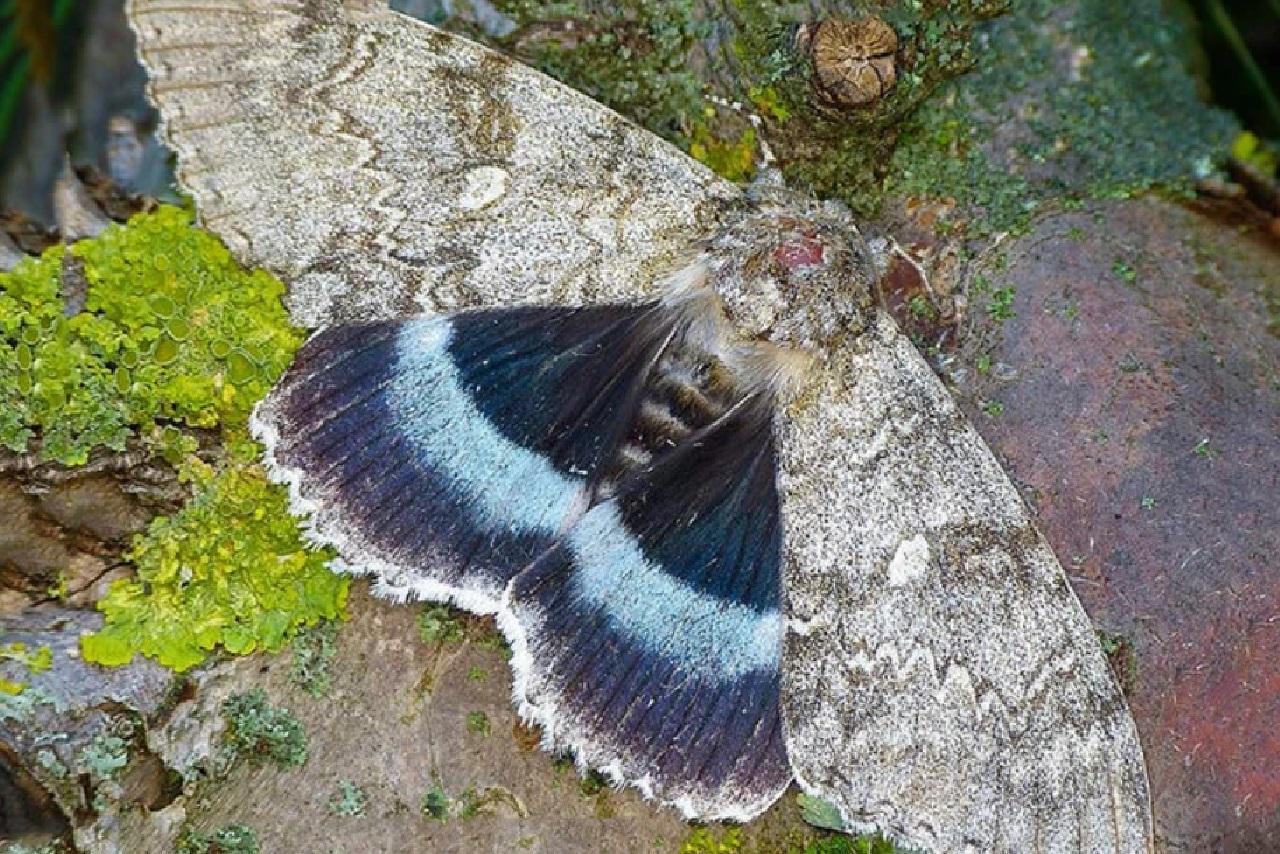 Краснокнижных полосатых бабочек заметили на Южном Урале