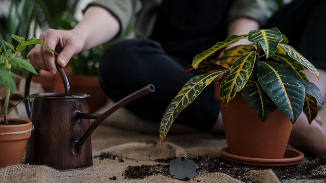 6 опасных комнатных растений, от которых лучше держаться подальше