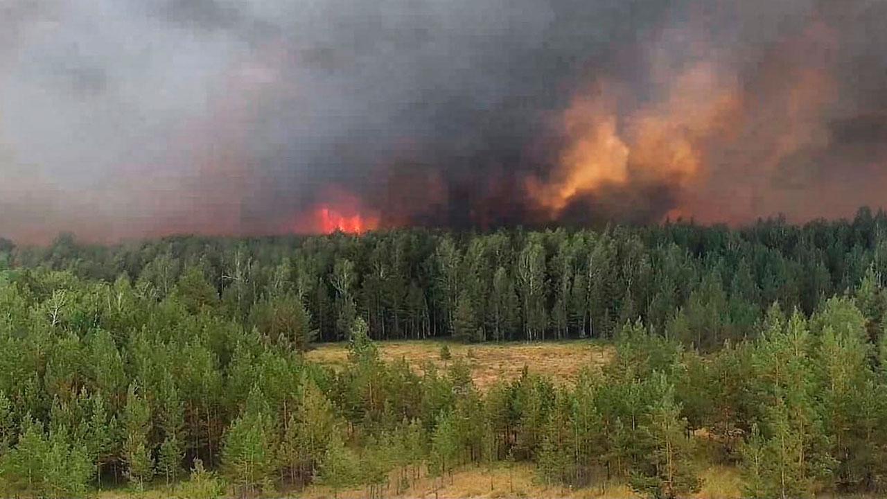 Тысячи новых деревьев: уничтоженный пожаром лес восстанавливают на Южном Урале