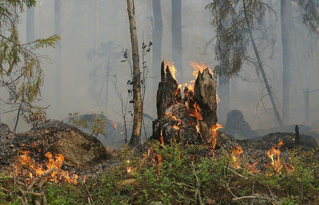В Челябинской области второй день тушат лесной пожар
