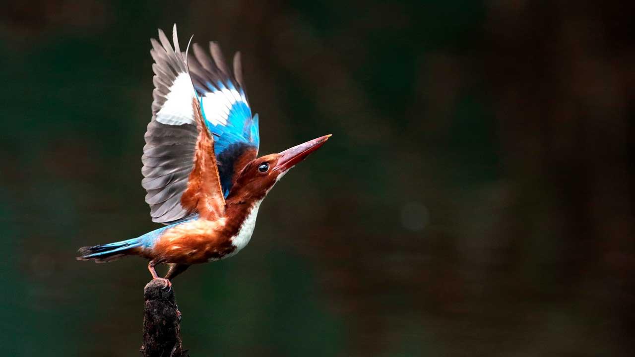 Наблюдатели за птицами: на Южном Урале запустили фотоконкурс бердвотчеров