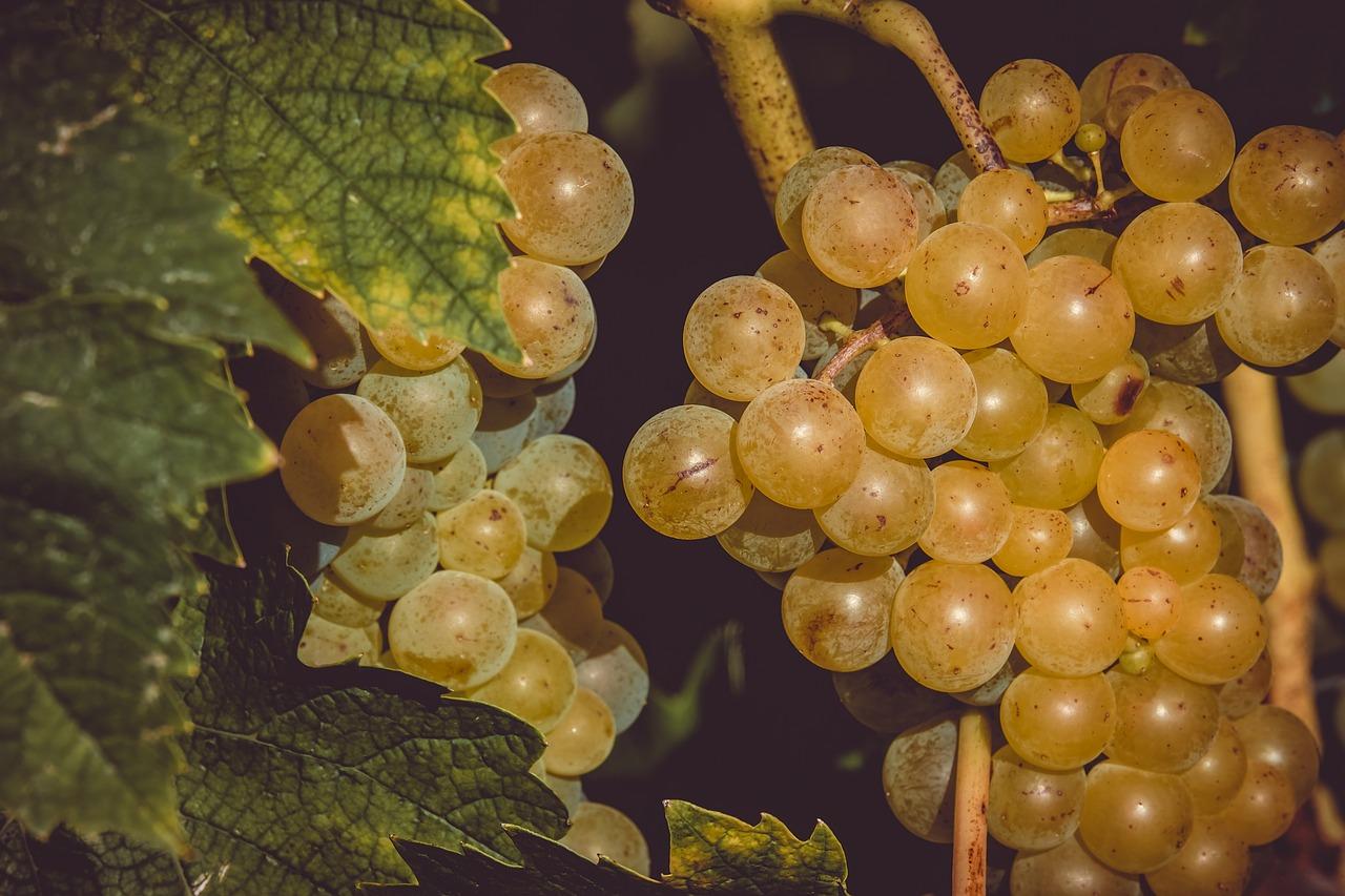 Природный антидепрессант: чем полезен виноград и как выбрать правильно