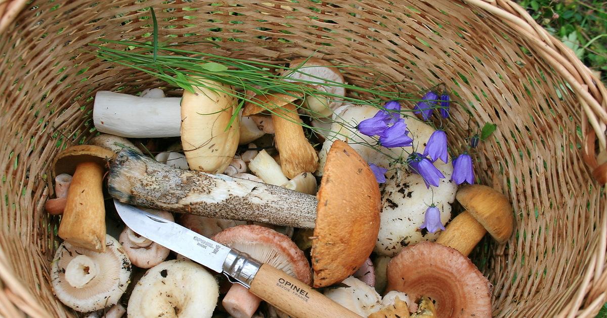 Хоть косой коси: на Южном Урале небывалый урожай белых грибов