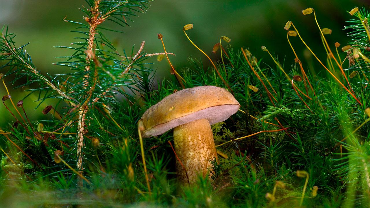 Ползают и воняют: топ-5 необычных грибов в Челябинской области