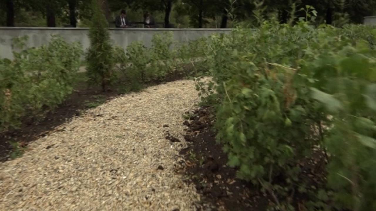 Зеленые джунгли: лабиринт появится в центре Челябинска