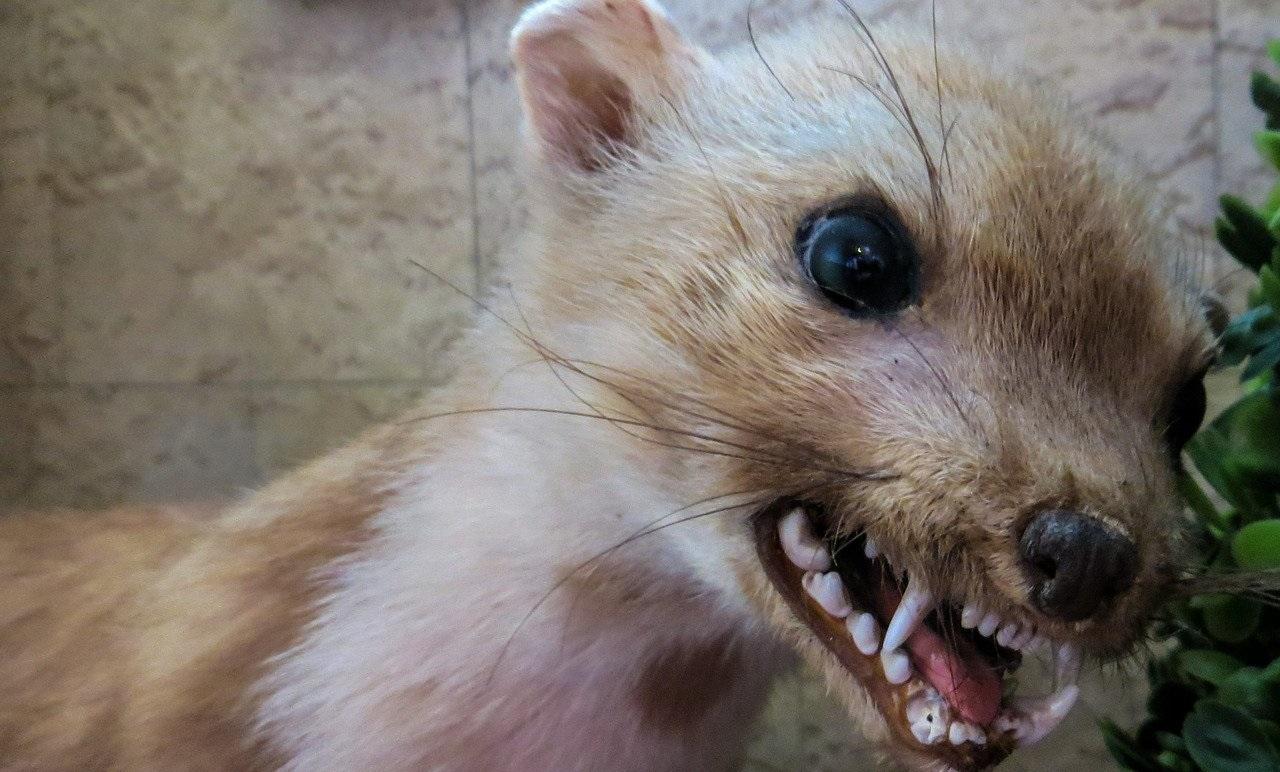 Умерла домашняя кошка: новый случай заражения бешенством на Южном Урале