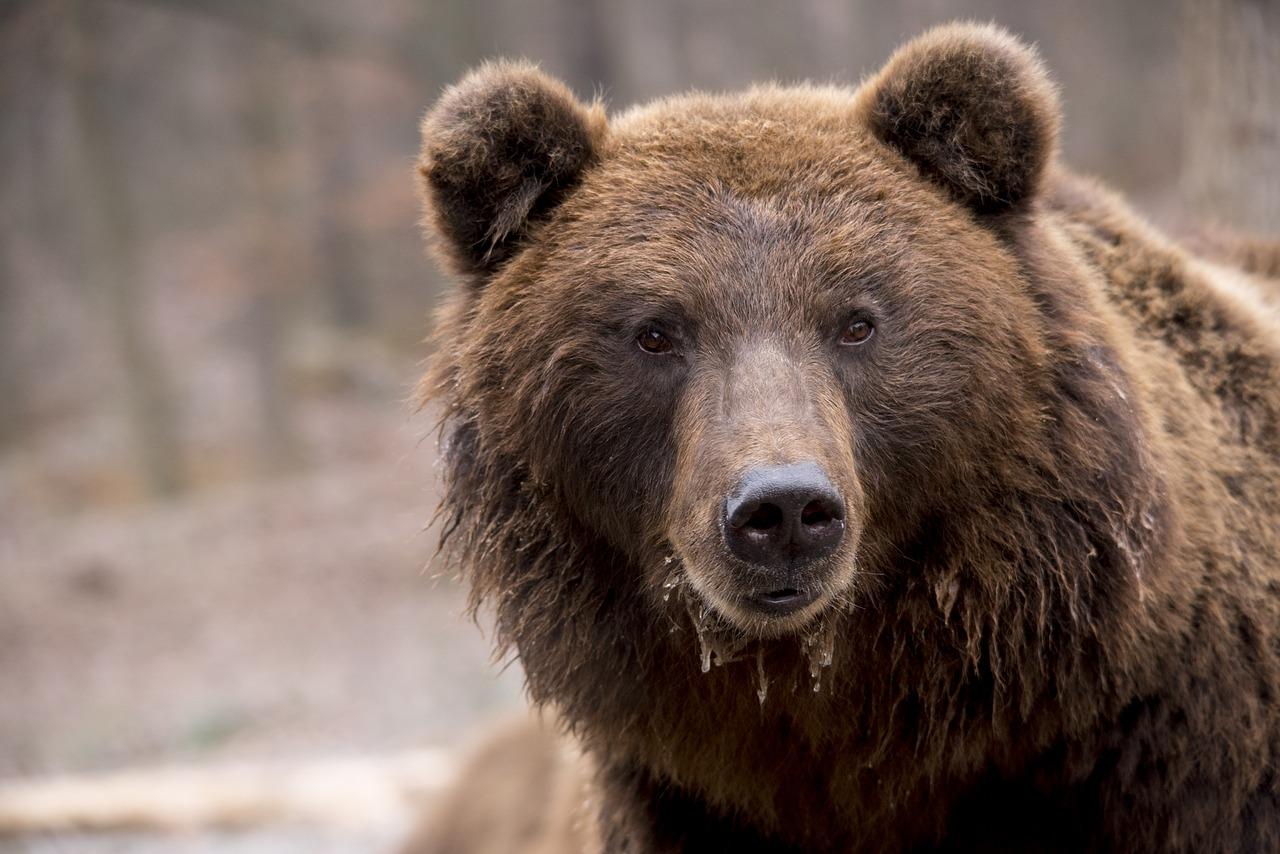 В лесах Челябинской области нашли следы животных размером с голову ребенка