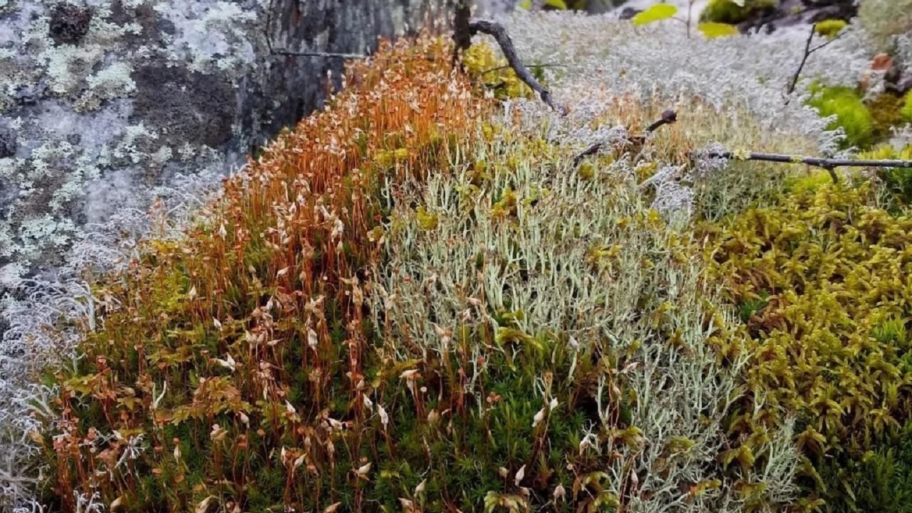 «Им больше 400 млн лет». В Челябинской области активно разрослись древние растения