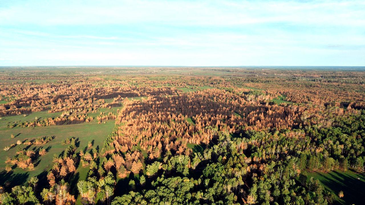 Лесные пожары, COVID-19 и экология: итоги визита Владимира Путина в Челябинскую область