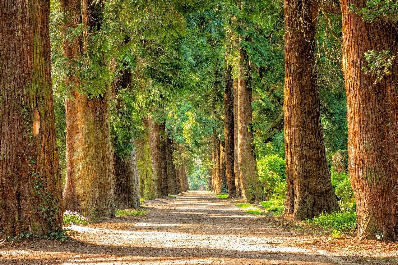 Под угрозой 800 деревьев: в Копейске разгорелся конфликт из-за реконструкции парка