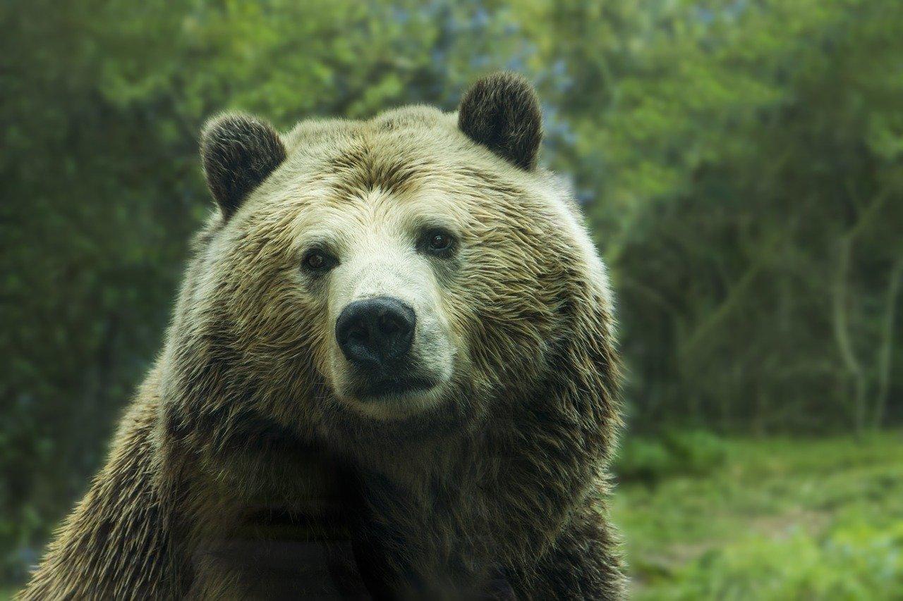 Лесная спальня с кухней: в Челябинской области нашли огромное жилище медведя