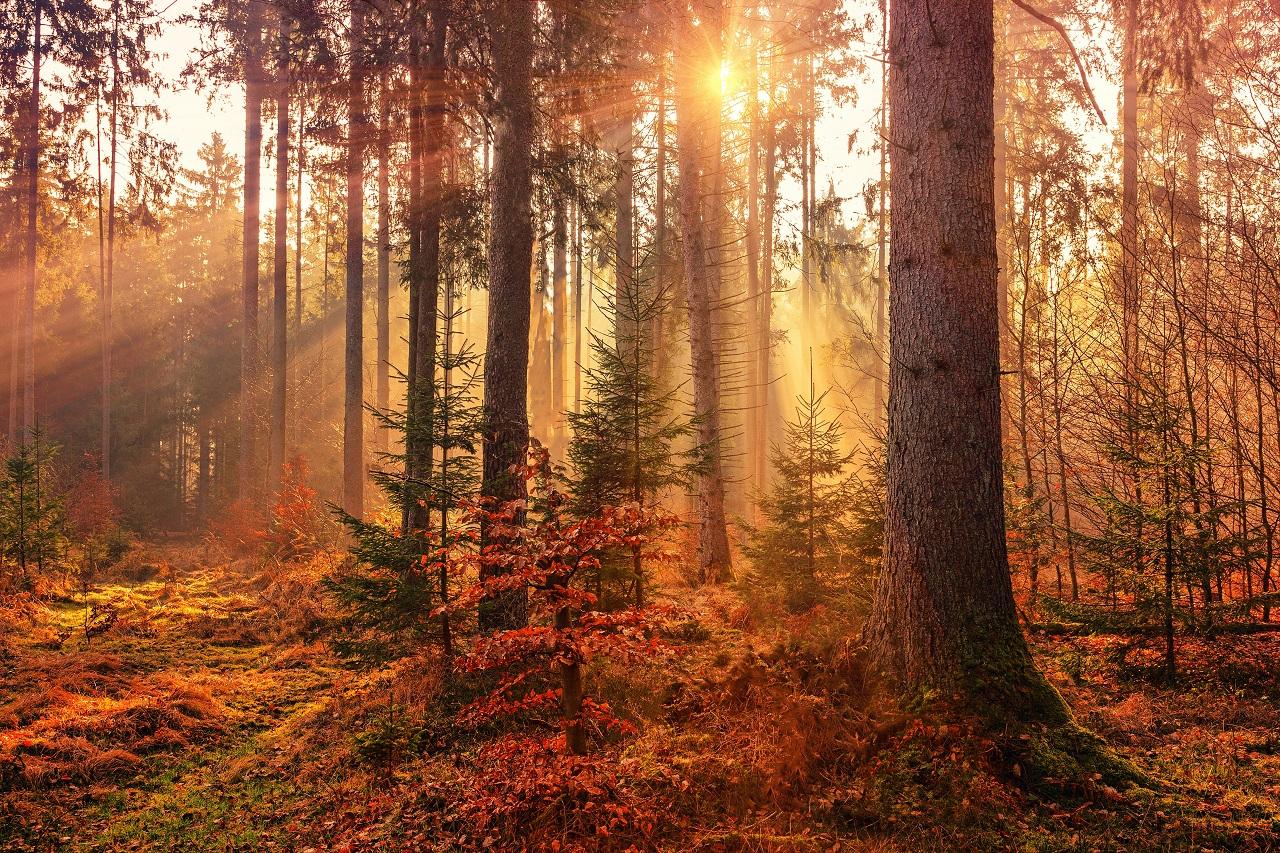 Минус 14 °С: синоптики рассказали о погоде в Челябинске в сентябре