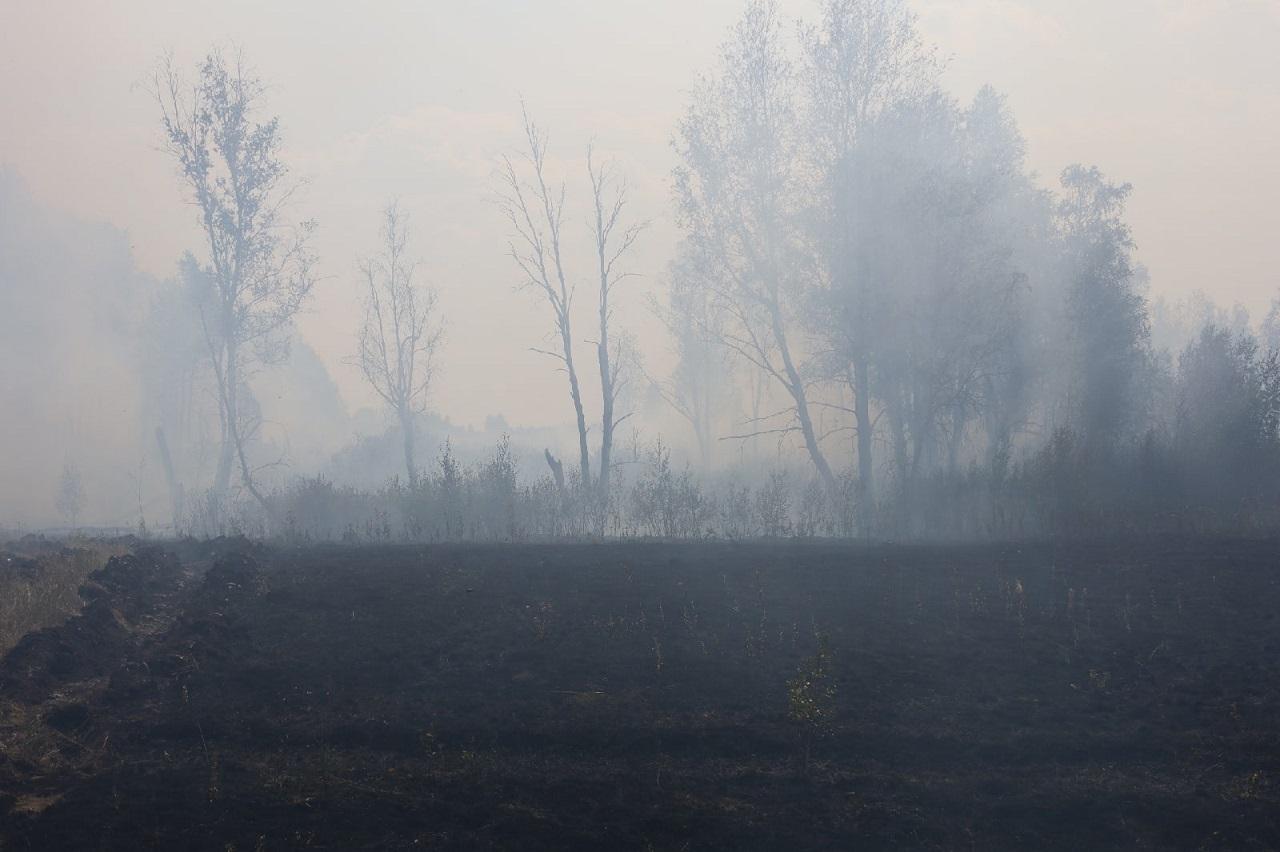 Переход лесного пожара на село удалось предотвратить в Челябинской области