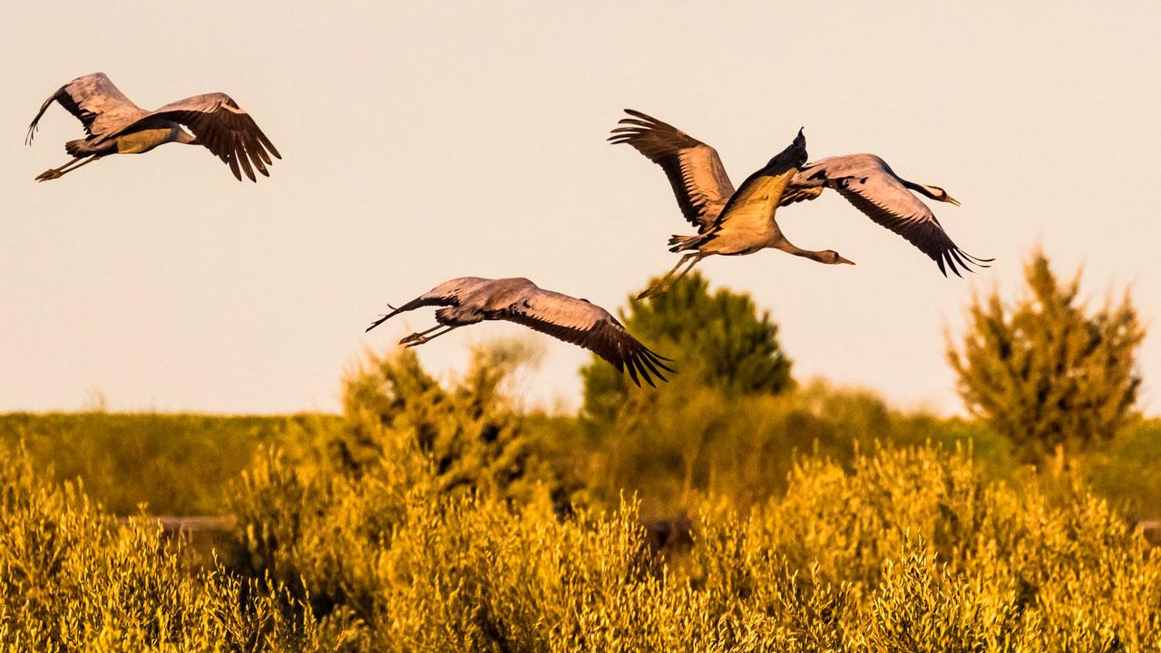Птицы в Челябинской области предсказали скорую осень