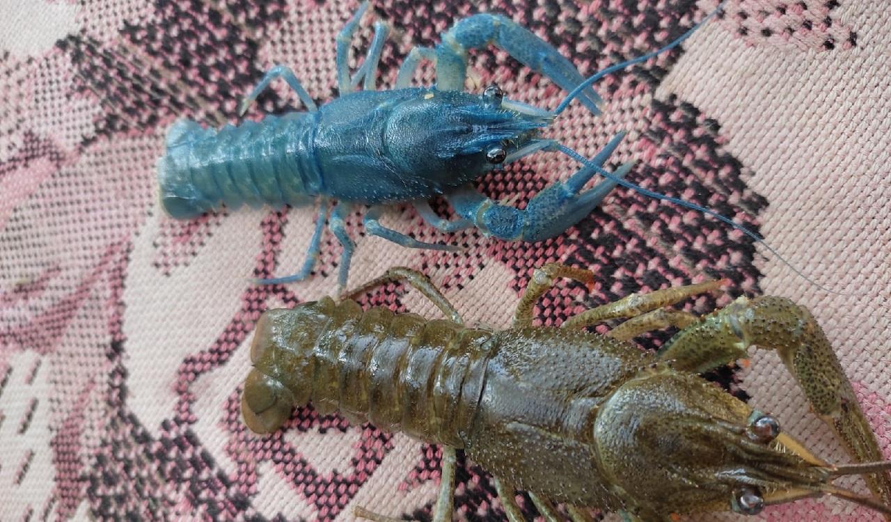 Необычный улов рыбаков из Челябинска оценили в лаборатории водных существ