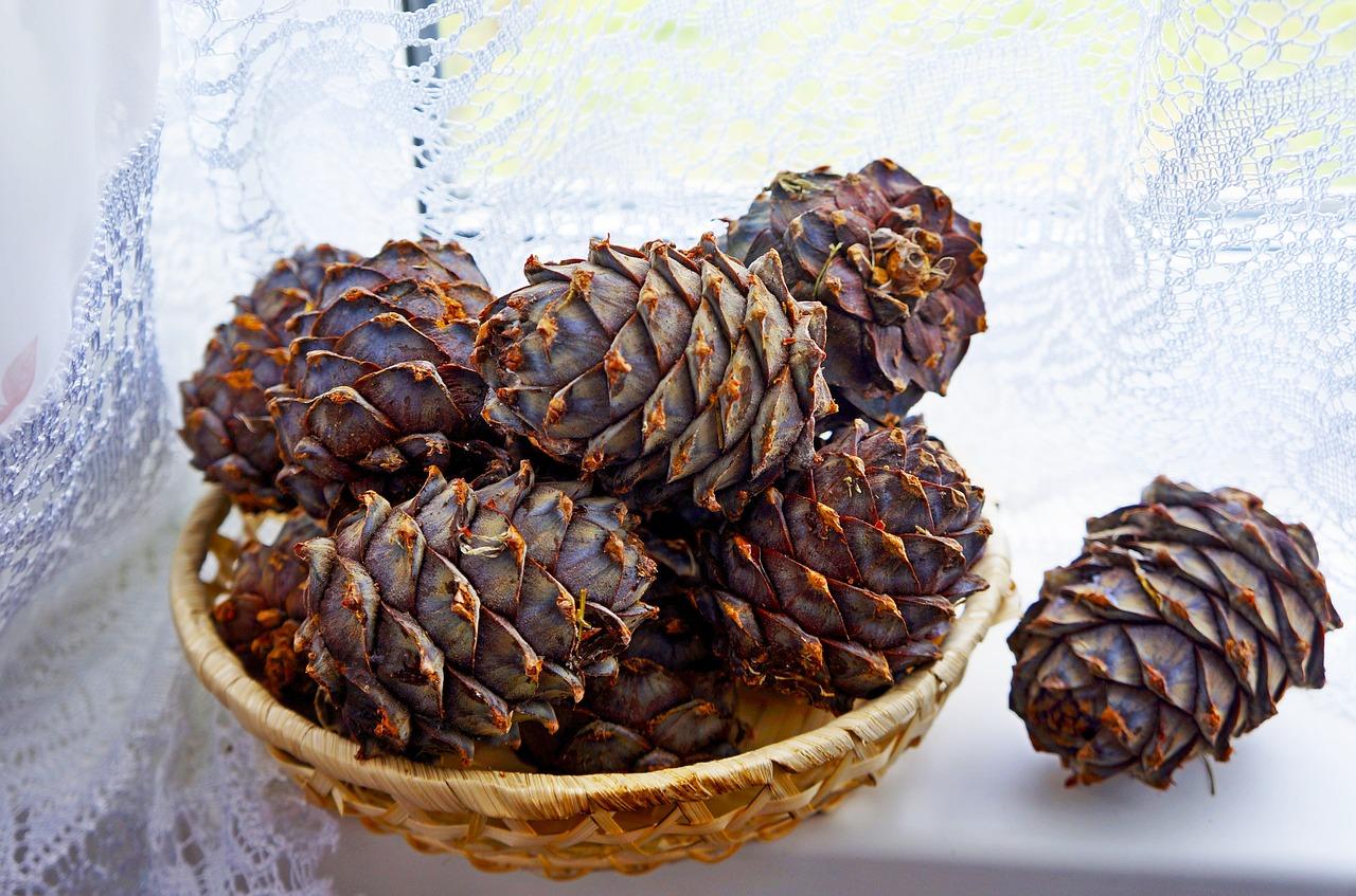 Под особой охраной: в Челябинской области созревают редкие шишки с орехами