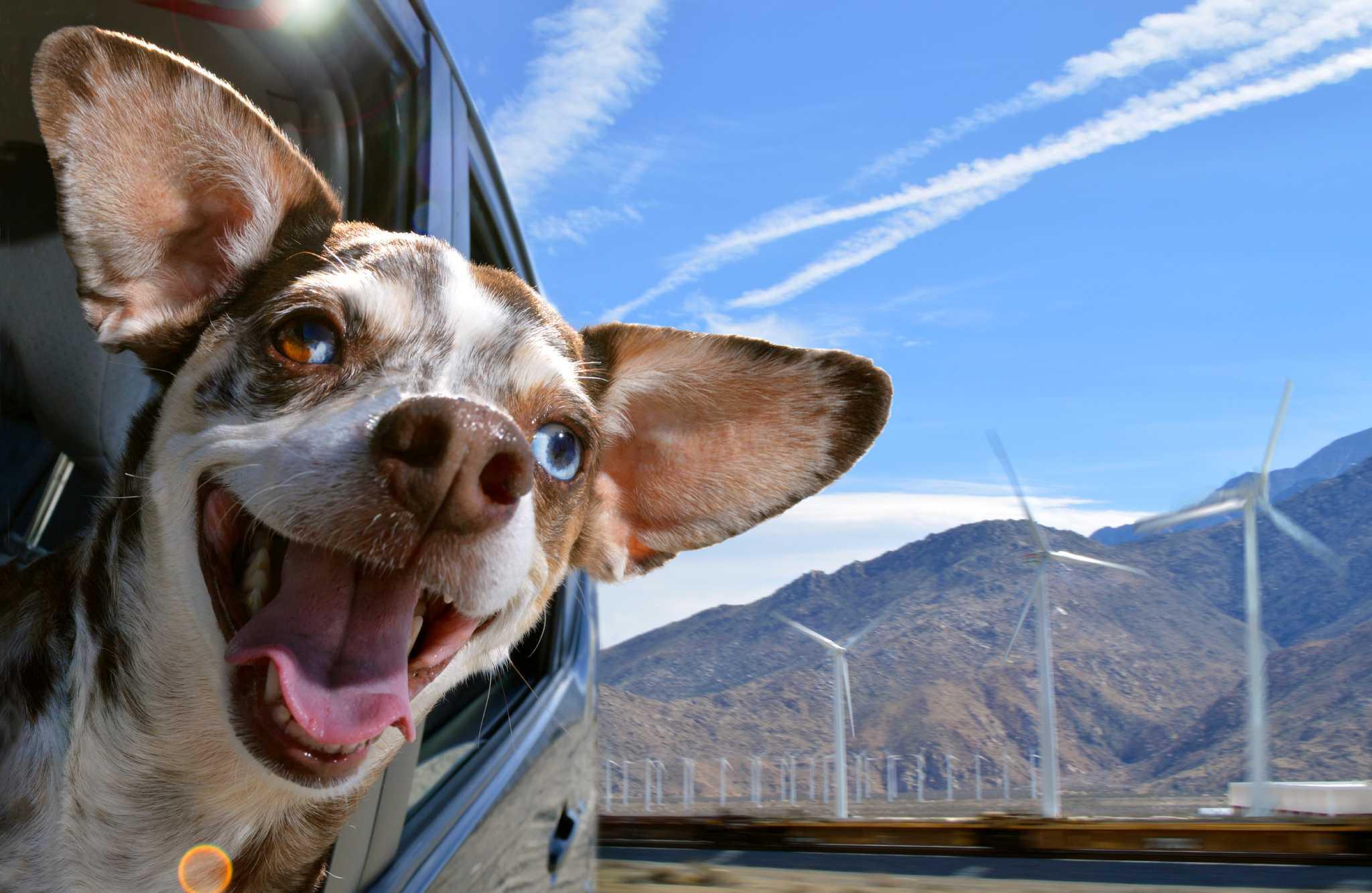 Гороскоп по дате рождения: на какую породу собак похожи зимние знаки зодиака