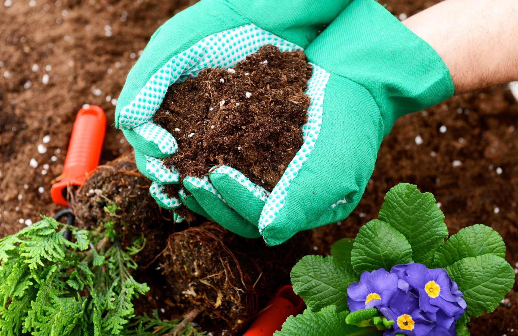 Советы садоводов: как и чем удобрить растения и цветы в августе