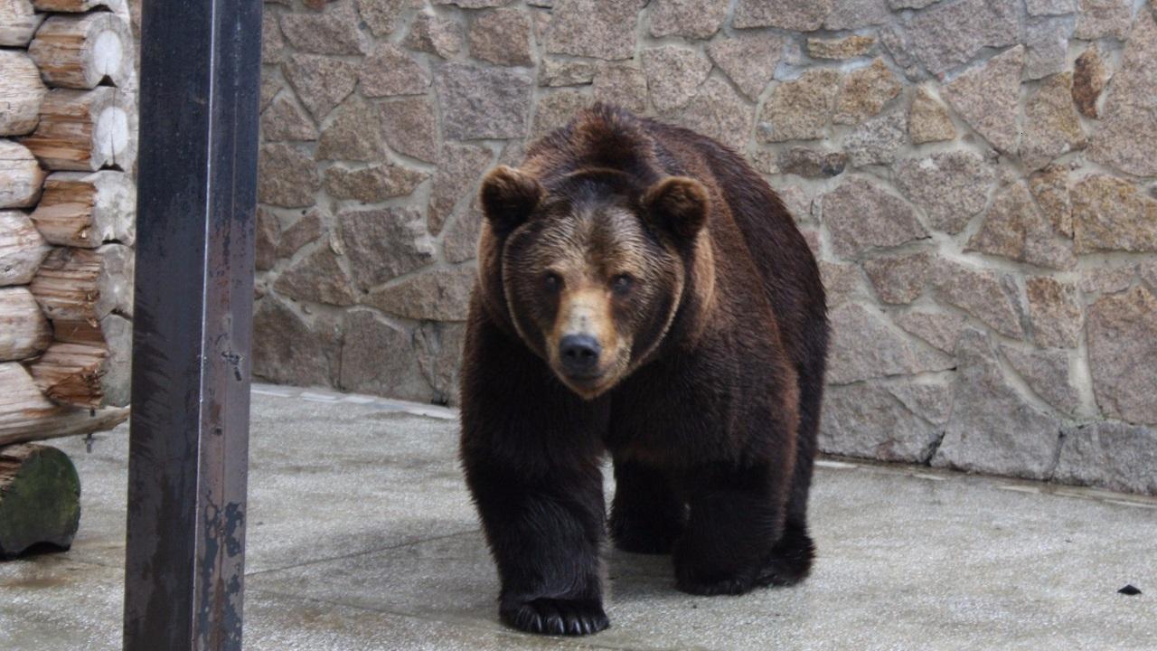 В Челябинском зоопарке отравили медведей Степана и Машу
