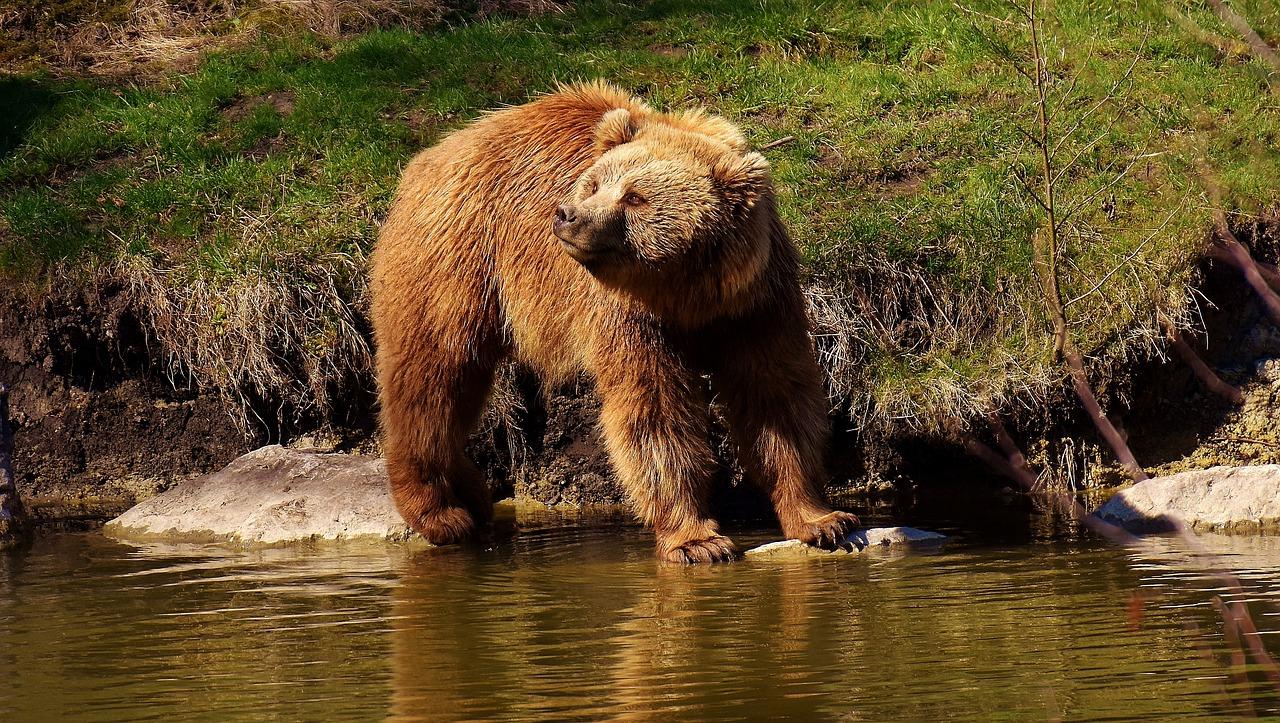 В Челябинской области удалось снять на видео обед медведя в лесу
