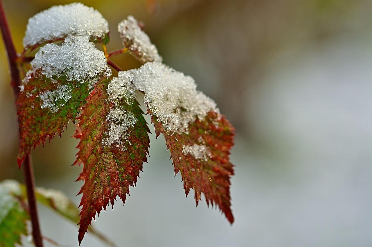 Самый холодный день ждет жителей Челябинской области
