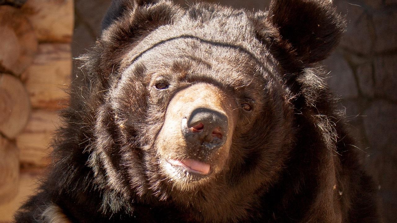 Еще одного медведя отравили в зоопарке Челябинска