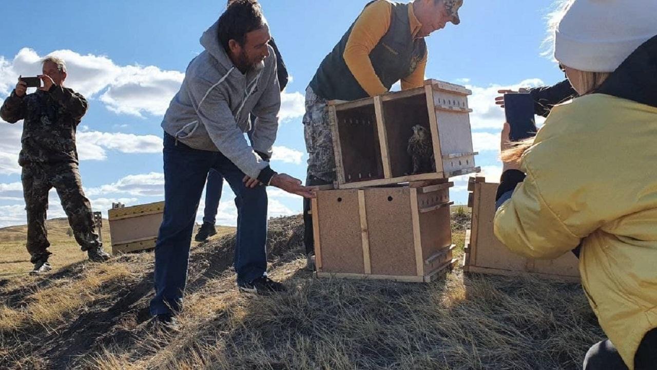 10 редких птиц выпустили на волю в Челябинской области