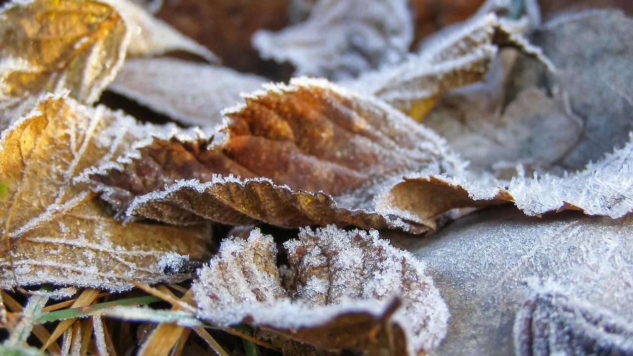 Погода в Челябинске: синоптики предупредили о заморозках до 0 градусов и сильном ветре