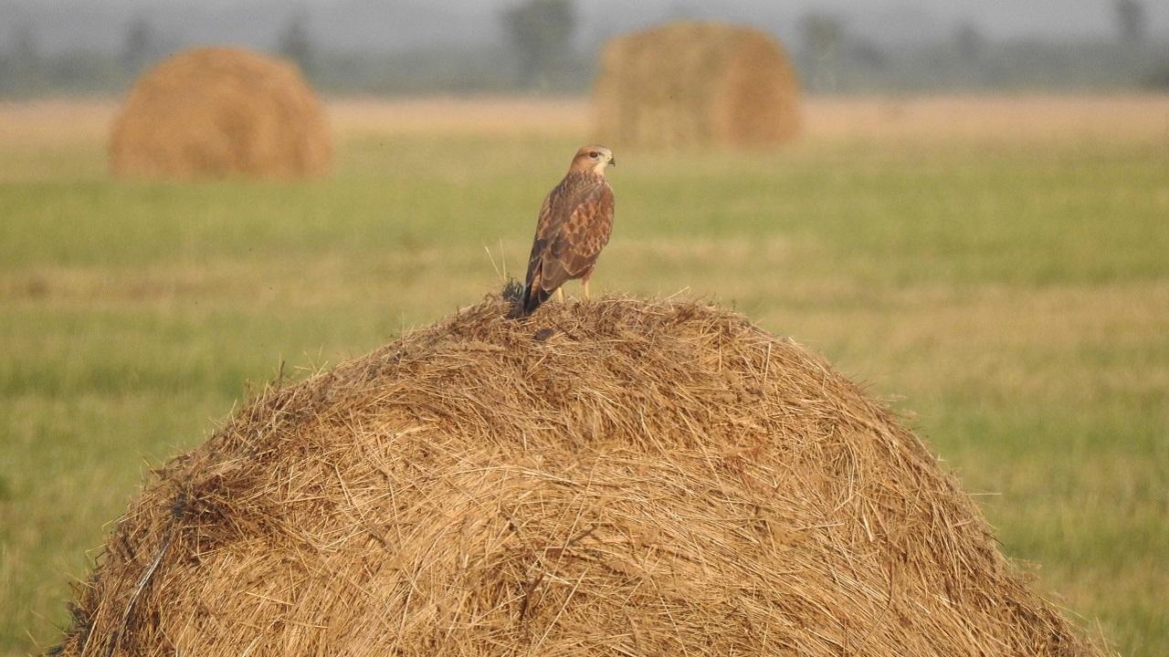 Массовая миграция птиц началась в Челябинской области