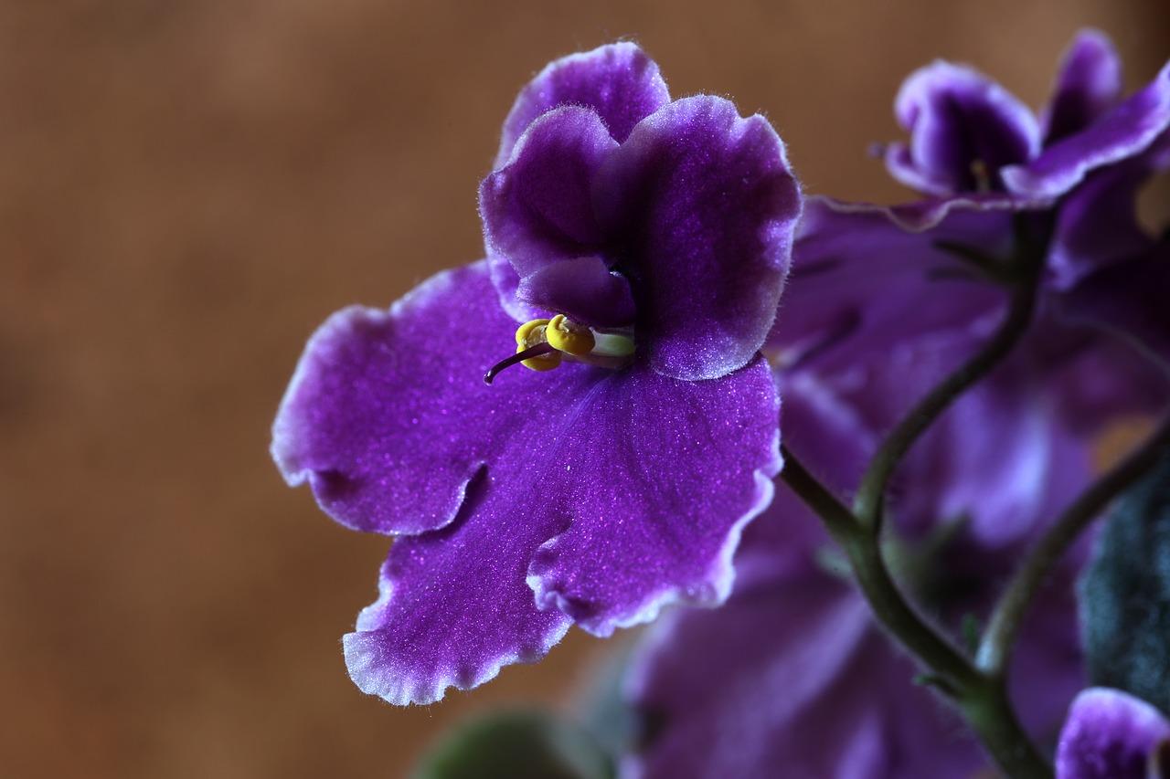 Магниты фортуны: 5 цветов, которые притягивают удачу