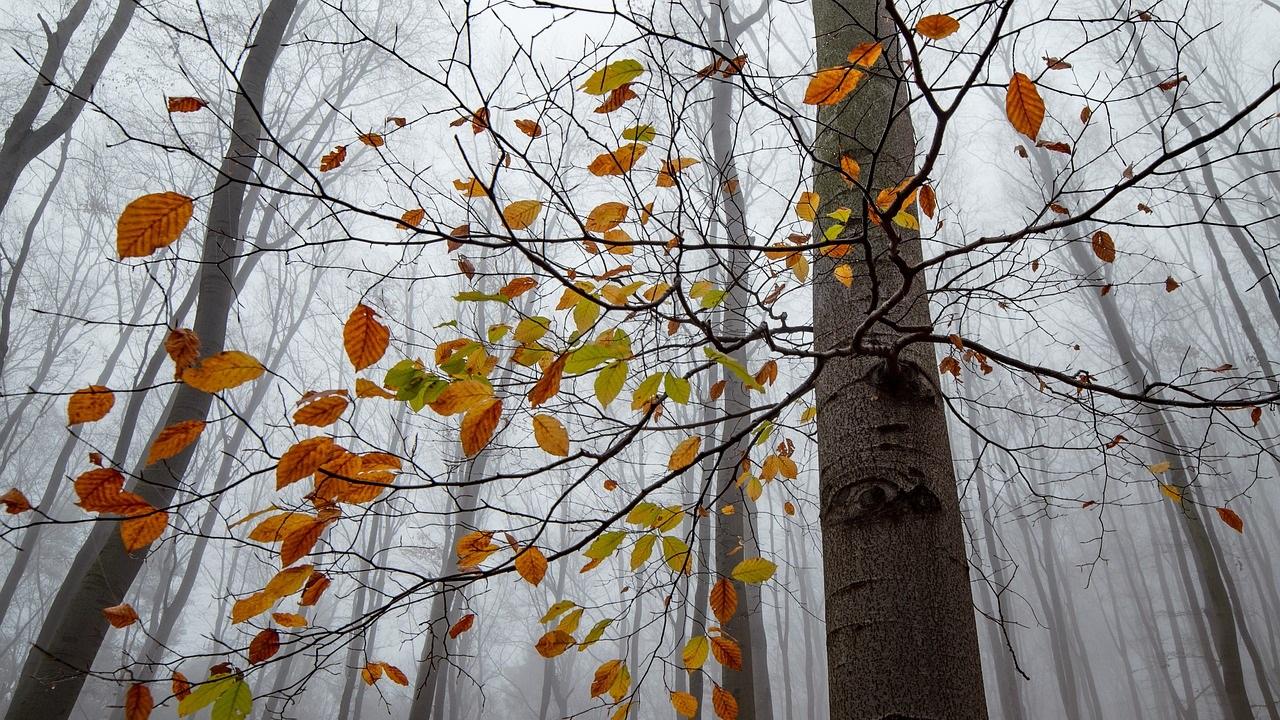 Погода в Челябинской области: гололёд и туман прогнозируют синоптики
