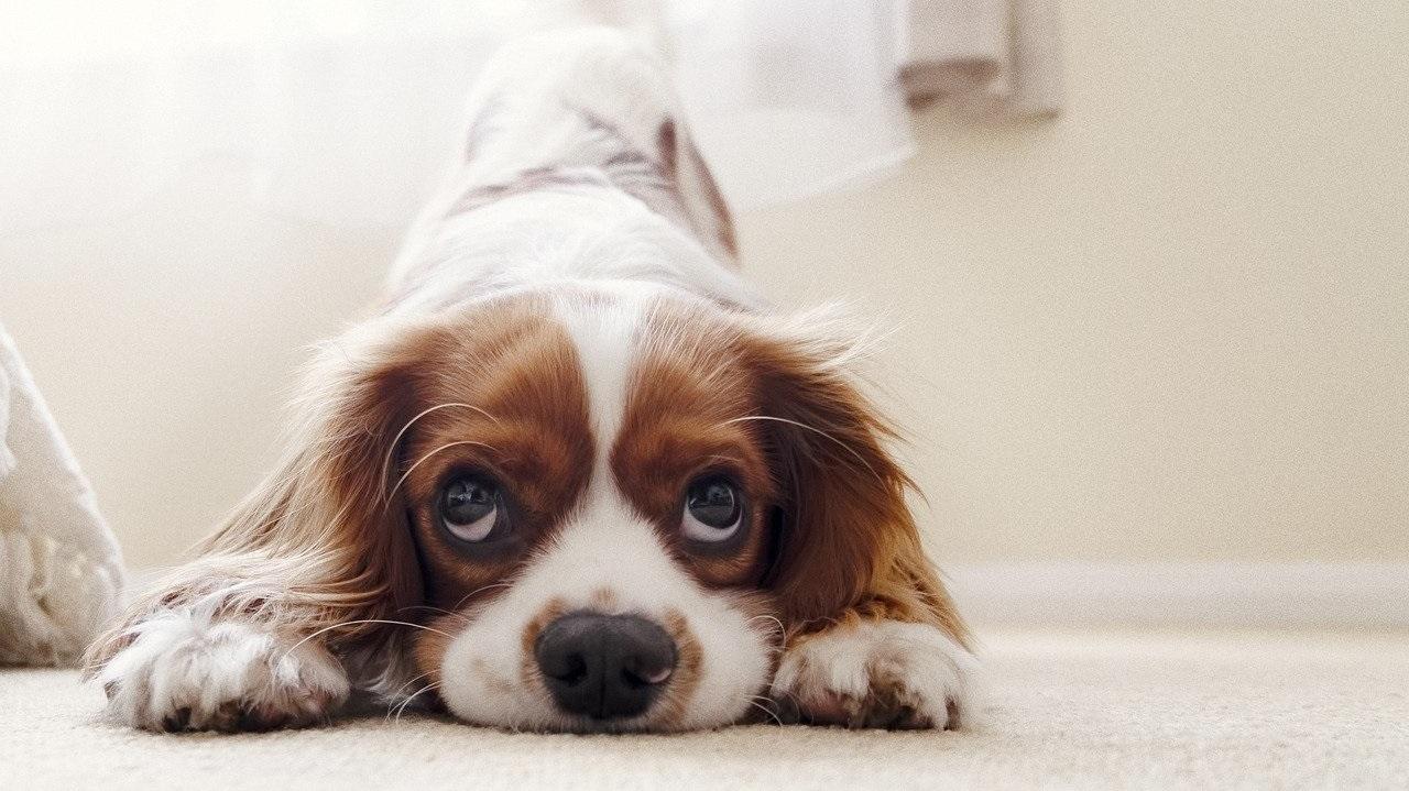 Защищают от несчастий: народные приметы о собаках