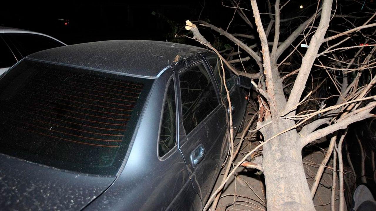 Дерево рухнуло на припаркованные автомобили в Челябинске