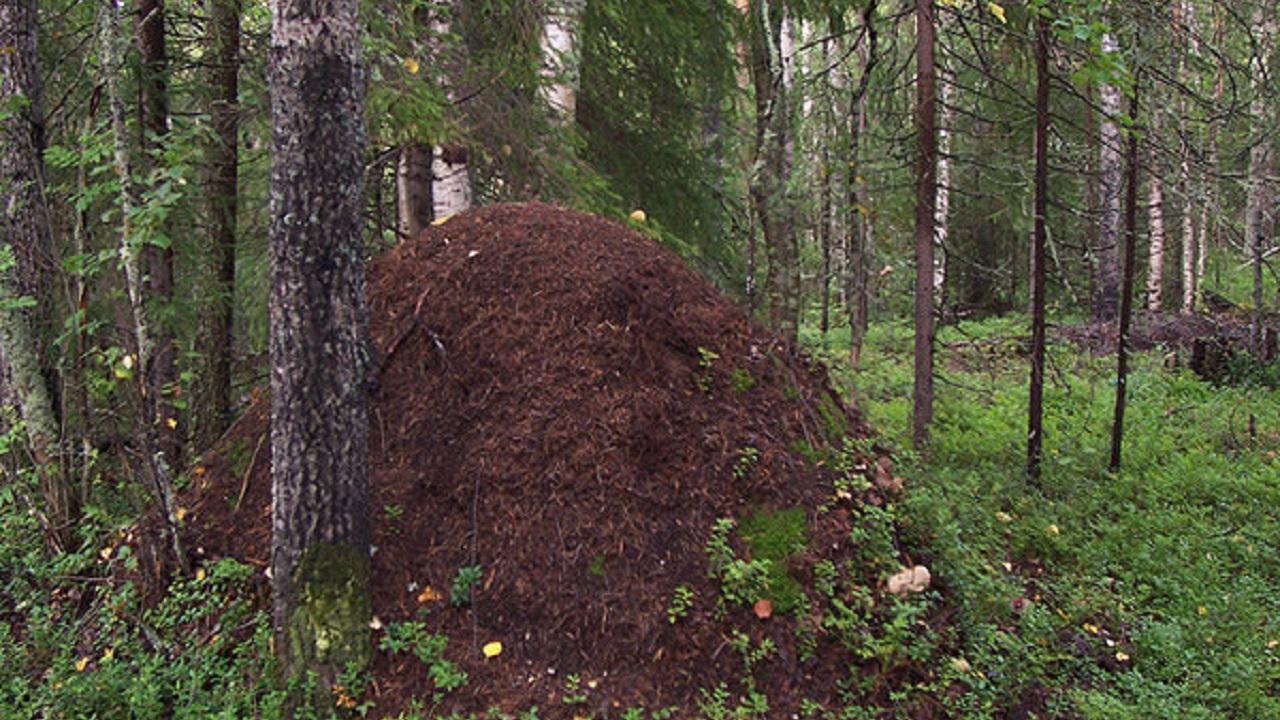 Тысячи муравейников: 6 необычных природных ландшафтов Южного Урала