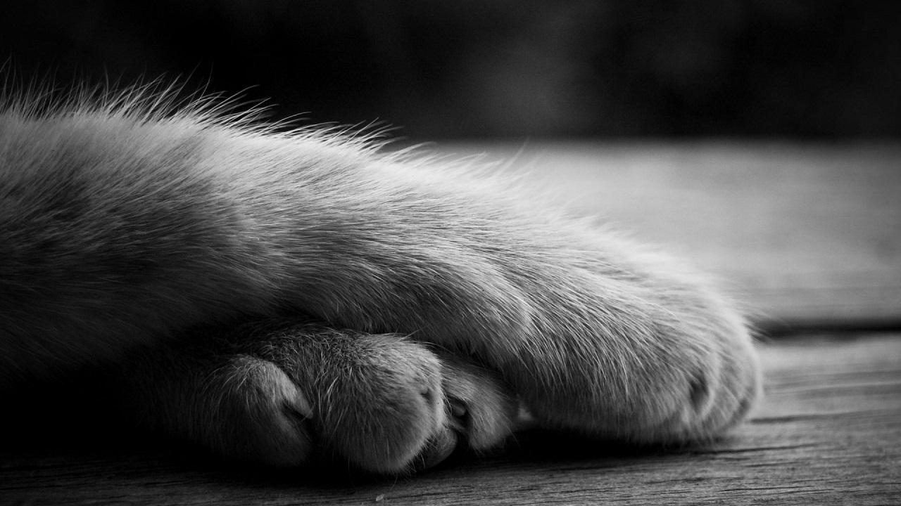 Жительница Челябинской области в отместку выбросила котенка из окна
