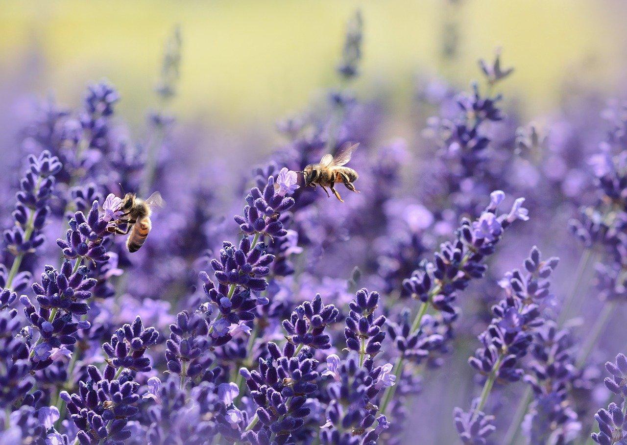 Названа причина массовой гибели пчел в Челябинской области
