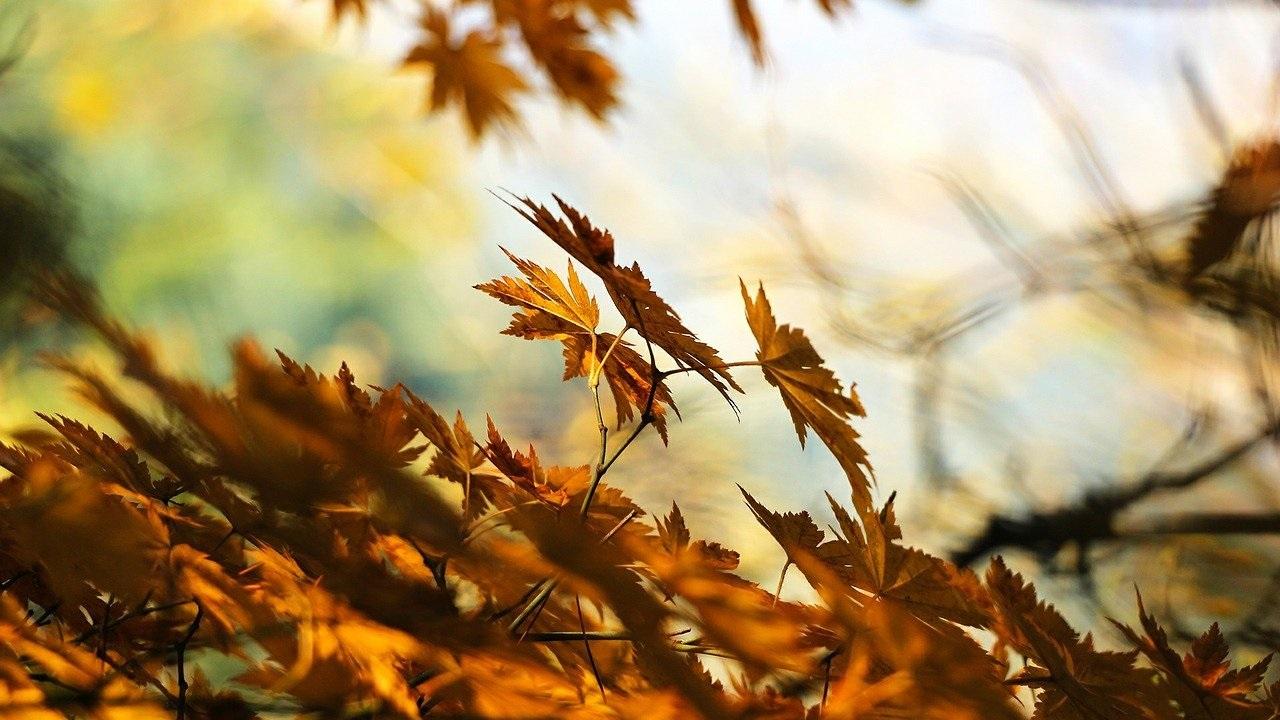 Какой будет погода в Челябинске в октябре: природа вновь решила удивить