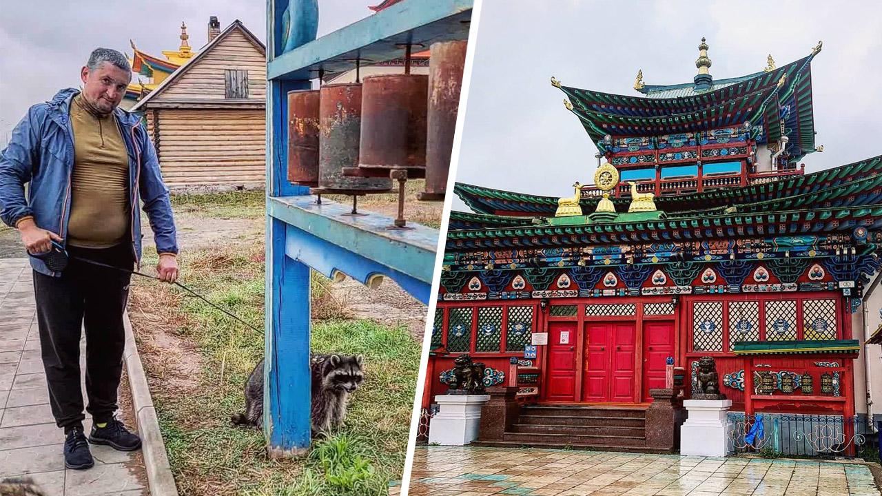 Енот-блогер Витя из Челябинска попал в буддийский монастырь